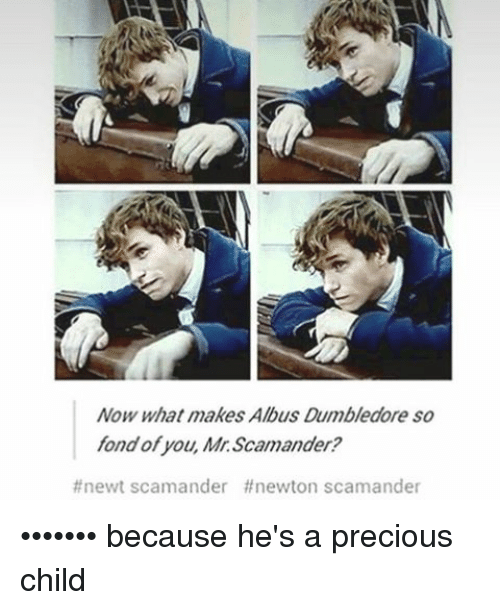 Fonded: Now what makes Albus Dumbledore so  fond of you, Mr. Scamander?  #newt scamander ff newton scamander ••••••• because he's a precious child