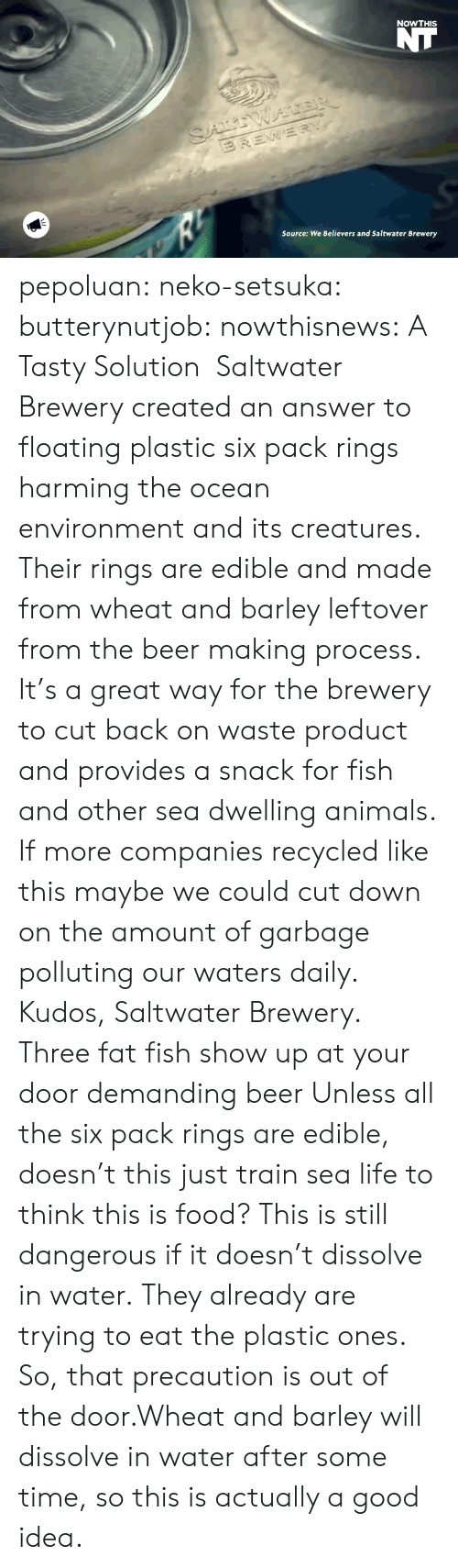 precaution: NOWTHIS  Source: We Believers and Saltwater Brewery pepoluan:  neko-setsuka:  butterynutjob:  nowthisnews:  A Tasty Solution   Saltwater Brewery created an answer to floating plastic six pack rings harming the ocean environment and its creatures. Their rings are edible and made from wheat and barley leftover from the beer making process. It's a great way for the brewery to cut back on waste product and provides a snack for fish and other sea dwelling animals. If more companies recycled like this maybe we could cut down on the amount of garbage polluting our waters daily. Kudos, Saltwater Brewery.    Three fat fish show up at your door demanding beer   Unless all the six pack rings are edible, doesn't this just train sea life to think this is food? This is still dangerous if it doesn't dissolve in water.  They already are trying to eat the plastic ones. So, that precaution is out of the door.Wheat and barley will dissolve in water after some time, so this is actually a good idea.