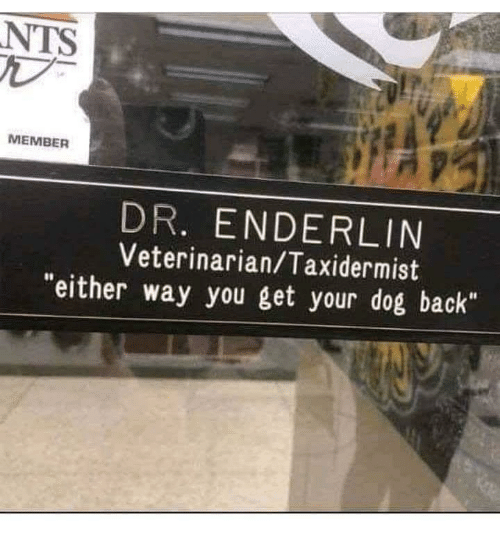 "Veterinarian, Back, and Dog: NTS  MEMBER  DR. ENDERLIN  Veterinarian/Taxidermist  ""either way you get your dog back"""