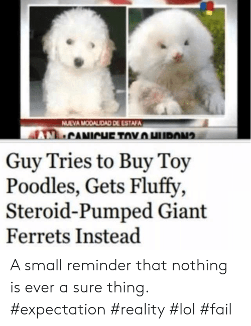 Fail, Lol, and Giant: NUEVA MODALIDAD DE ESTAFA  CANICHE TOYHURON  Guy Tries to Buy Toy  Poodles, Gets Fluffy  Steroid-Pumped Giant  Ferrets Instead A small reminder that nothing is ever a sure thing. #expectation #reality #lol #fail
