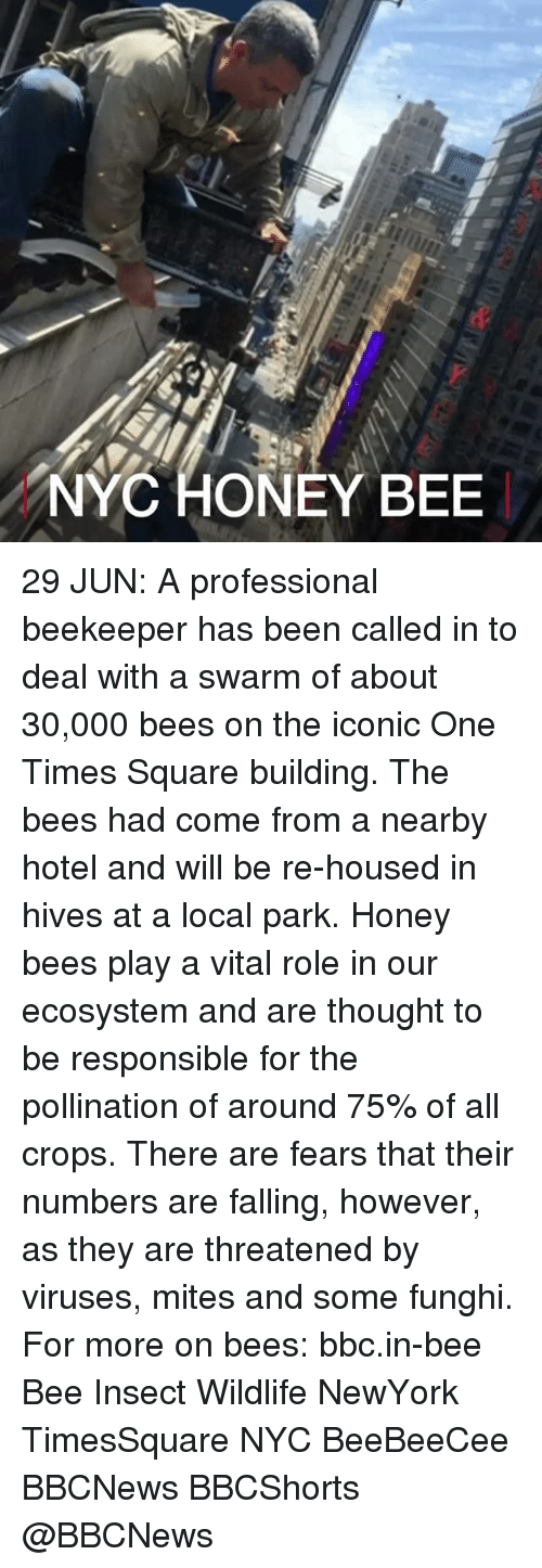 hives: NYC HONEY BEE 29 JUN: A professional beekeeper has been called in to deal with a swarm of about 30,000 bees on the iconic One Times Square building. The bees had come from a nearby hotel and will be re-housed in hives at a local park. Honey bees play a vital role in our ecosystem and are thought to be responsible for the pollination of around 75% of all crops. There are fears that their numbers are falling, however, as they are threatened by viruses, mites and some funghi. For more on bees: bbc.in-bee Bee Insect Wildlife NewYork TimesSquare NYC BeeBeeCee BBCNews BBCShorts @BBCNews