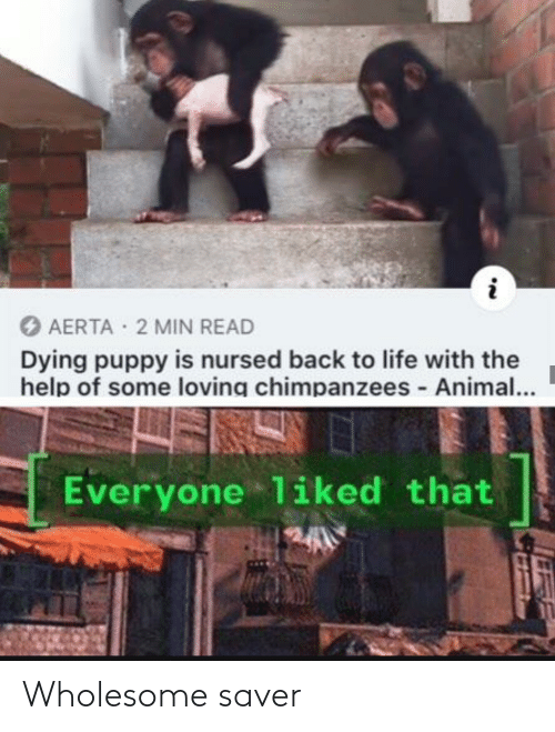 Puppy: O AERTA 2 MIN READ  Dying puppy is nursed back to life with the  help of some loving chimpanzees - Animal...  Everyone liked that Wholesome saver