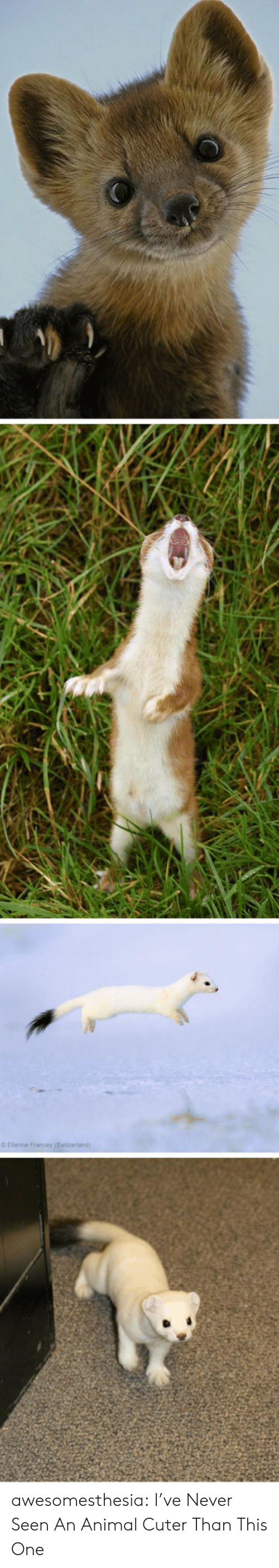 Tumblr, Animal, and Blog: O Etenne Francey (Switzeriand) awesomesthesia:  I've Never Seen An Animal Cuter Than This One