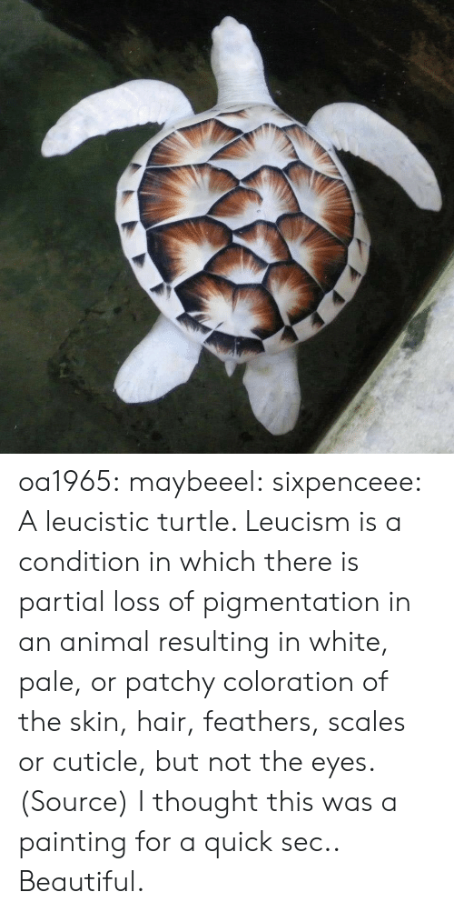 Partial: oa1965: maybeeel:  sixpenceee:  A leucistic turtle. Leucism is a condition in which there is partial loss of pigmentation in an animal resulting in white, pale, or patchy coloration of the skin, hair, feathers, scales or cuticle, but not the eyes. (Source)  I thought this was a painting for a quick sec..   Beautiful.