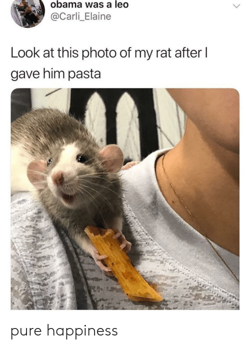 leo: obama was a leo  @Carli_Elaine  Look at this photo of my rat after l  gave him pasta pure happiness