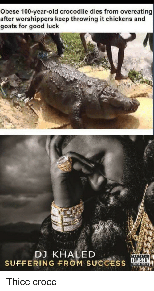 Anaconda, DJ Khaled, and Good: Obese 100-year-old crocodile dies from overeating  after worshippers keep throwing it chickens and  goats for good luck  Odos  DJ KHALED  SUFFERING FROM SUCCSOA  ADVISORY  IPLICIT CONTENT Thicc crocc