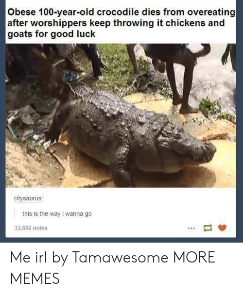 Anaconda, Dank, and Memes: Obese 100-year-old crocodile dies from overeating  after worshippers keep throwing it chickens and  goats for good luck  citysaurus  this is the way i wanna go  33,682 notes Me irl by Tamawesome MORE MEMES