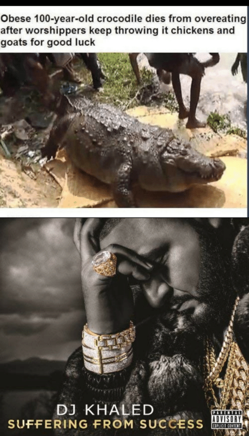 goats: Obese 100-year-old crocodile dies from overeating  after worshippers keep throwing it chickens and  goats for good luck  DJ KHALED  SUFFERING FROM SUCCESS  PARENTAL  EIPLICIT CONTENT