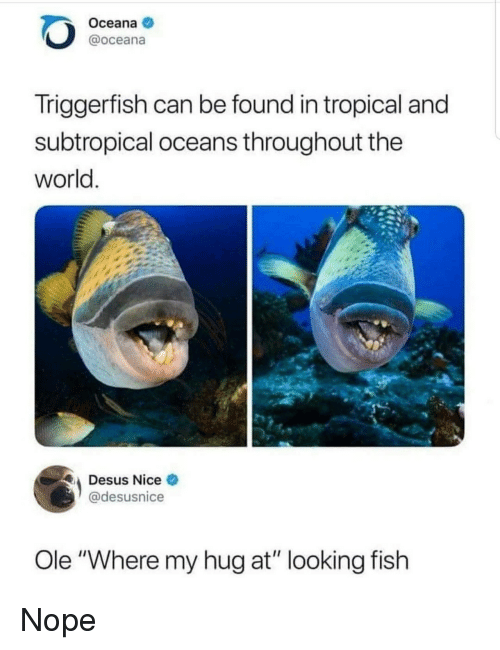 "Fish, World, and Nope: Oceana  @oceana  Triggerfish can be found in tropical and  subtropical oceans throughout the  world  Desus Nice  @desusnice  Ole ""Where my hug at"" looking fish Nope"