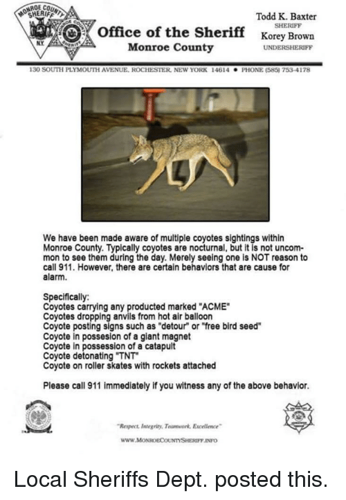 """New York, Phone, and Respect: OCHERIFFL  Todd K. Baxter  SHERIFF  office of the Sherifforey Brown  NY  Monroe County  UNDERSHERIFF  130 SOUTH PLYMOUTİ AVENUE. ROCHESTER, NEw YORK  146 14  . PHONE (585) 753-4178  We have been made aware of multiple coyotes sightings within  Monroe County. Typically coyotes are nocturnal, but it is not uncom-  mon to see them during the day. Merely seeing one is NOT reason to  call 911. However, there are certain behaviors that are cause for  alarm.  Specifically:  Coyotes carrying any producted marked """"ACME""""  Coyotes dropping anvils from hot air balloon  Coyote posting signs such as """"detour"""" or """"free bird seed""""  Coyote in possesion of a giant magnet  Coyote in possession of a catapult  Coyote detonating """"TNT  Coyote on roller skates with rockets attached  Please call 911 immediately if you witness any of the above behavior.  Respect ntegriny, Teumwork Excelence  www.MoONROECOUNTYSHERIFF INFO Local Sheriffs Dept. posted this."""
