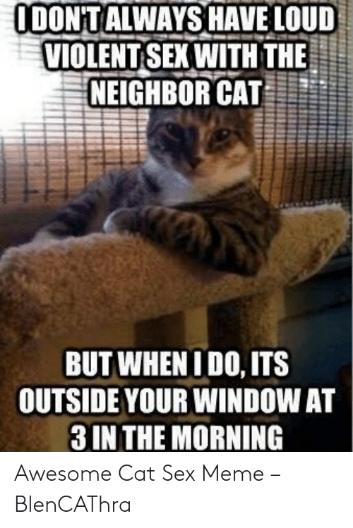 I Want Sex Meme: ODONTALWAYSHAVE LOUD  VIOLENT SEXWITH THE  NEIGHBOR CAT  BUT WHENIDO, ITS  OUTSIDE YOUR WINDOW AT  3 IN THE MORNING Awesome Cat Sex Meme – BlenCAThra