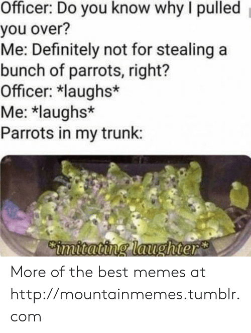 best memes: Officer: Do you know why I pulled  you over?  Me: Definitely not for stealing a  bunch of parrots, right?  Officer: laughs*  Me: *laughs*  Parrots in my trunk:  Cimitating laughter More of the best memes at http://mountainmemes.tumblr.com