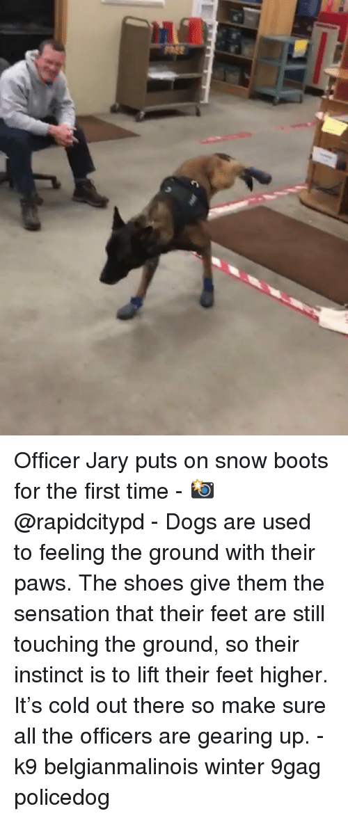 9gag, Dogs, and Memes: Officer Jary puts on snow boots for the first time - 📸@rapidcitypd - Dogs are used to feeling the ground with their paws. The shoes give them the sensation that their feet are still touching the ground, so their instinct is to lift their feet higher. It's cold out there so make sure all the officers are gearing up. - k9 belgianmalinois winter 9gag policedog