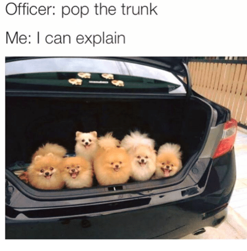 Pop The Trunk: Officer: pop the trunk  Me: I can explain