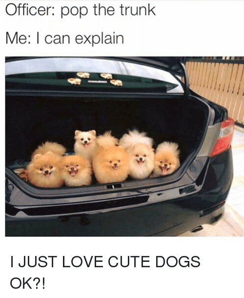 Pop The Trunk: Officer: pop the trunk  Me: I can explain I JUST LOVE CUTE DOGS OK?!