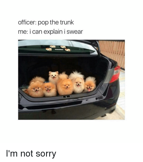 Pop The Trunk: officer: pop the trunk  me: i can explain i swear I'm not sorry