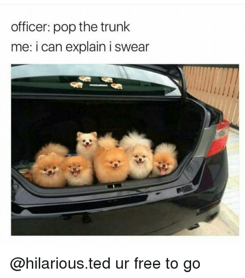 Pop The Trunk: officer: pop the trunk  me: i can explain i swear @hilarious.ted ur free to go