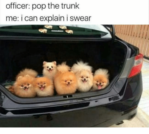 Pop The Trunk: officer pop the trunk  me: i can explain i swear