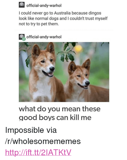 """Andy Warhol: official-andy-warhol  I could never go to Australia because dingos  look like normal dogs and I couldn't trust myself  not to try to pet them.  official-andy-warhol  what do you mean these  good boys can kill me <p>Impossible via /r/wholesomememes <a href=""""http://ift.tt/2IATKtV"""">http://ift.tt/2IATKtV</a></p>"""