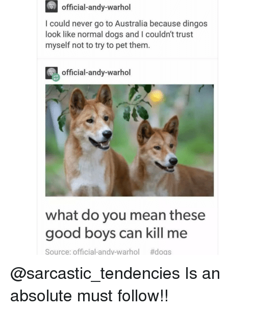 Andy Warhol: official-andy-warhol  I could never go to Australia because dingos  look like normal dogs and I couldn't trust  myself not to try to pet them.  official-andy-warhol  what do you mean these  good boys can kill me  Source: Official-andy-warhol  @sarcastic_tendencies Is an absolute must follow!!