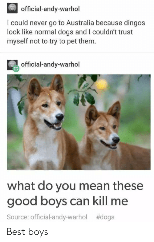 Andy Warhol: official-andy-warhol  I could never go to Australia because dingos  look like normal dogs and I couldn't trust  myself not to try to pet them.  official-andy-warhol  what do you mean these  good boys can kill me  Source: Official-andy-warhol Best boys