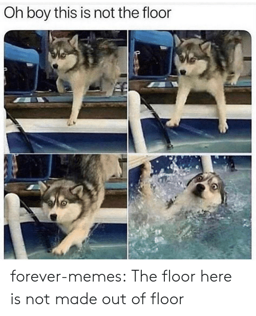 Memes, Tumblr, and Blog: Oh boy this is not the floor forever-memes:  The floor here is not made out of floor