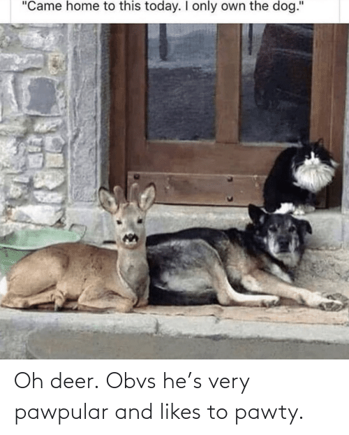 Deer: Oh deer. Obvs he's very pawpular and likes to pawty.