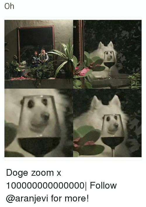 doges: Oh Doge zoom x 100000000000000| Follow @aranjevi for more!