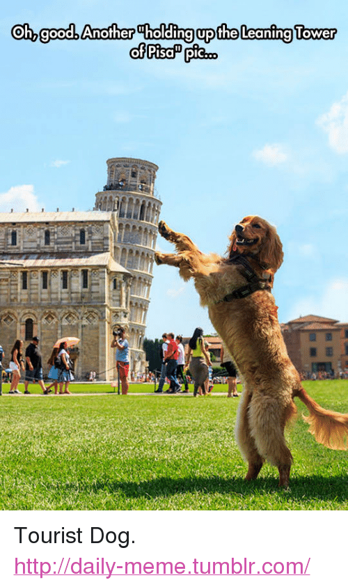 """leaning tower: Oh, goodb Another Tholding upthe Leaning Tower <p>Tourist Dog.<br/><a href=""""http://daily-meme.tumblr.com""""><span style=""""color: #0000cd;""""><a href=""""http://daily-meme.tumblr.com/"""">http://daily-meme.tumblr.com/</a></span></a></p>"""