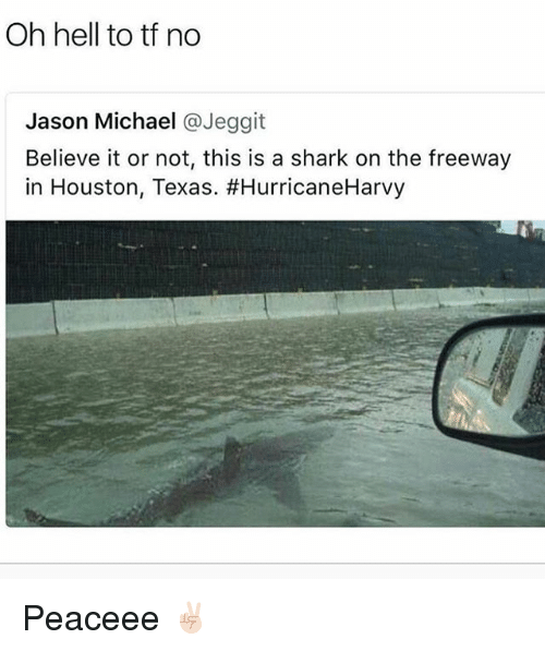 Sharked: Oh hell to tf no  Jason Michael @Jeggit  Believe it or not, this is a shark on the freeway  in Houston, Texas. Peaceee ✌🏻