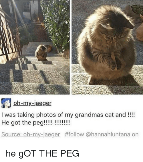 jaeger: oh-my-jaeger  I was taking photos of my grandmas cat and  He got the peg!!!!!  Source: oh-my-jaeger #follow @hannahluntana on he gOT THE PEG