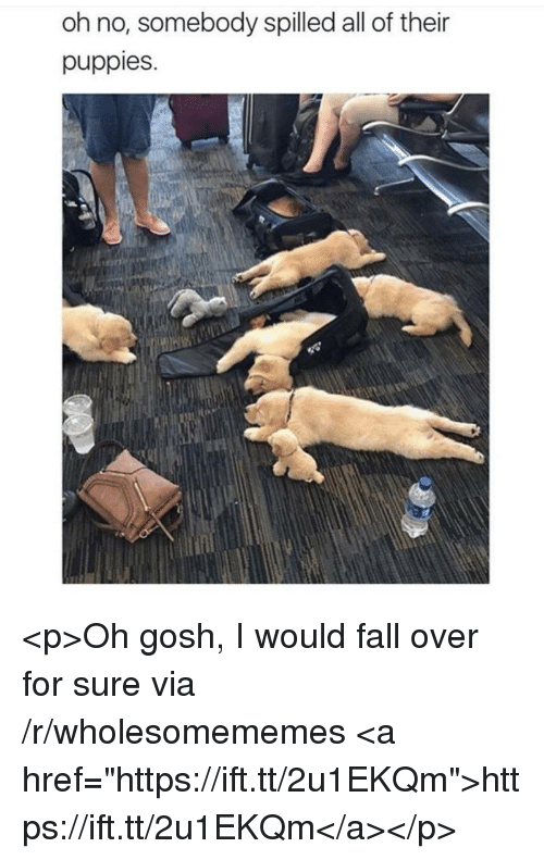 """fall over: oh no, somebody spilled all of their  puppies. <p>Oh gosh, I would fall over for sure via /r/wholesomememes <a href=""""https://ift.tt/2u1EKQm"""">https://ift.tt/2u1EKQm</a></p>"""