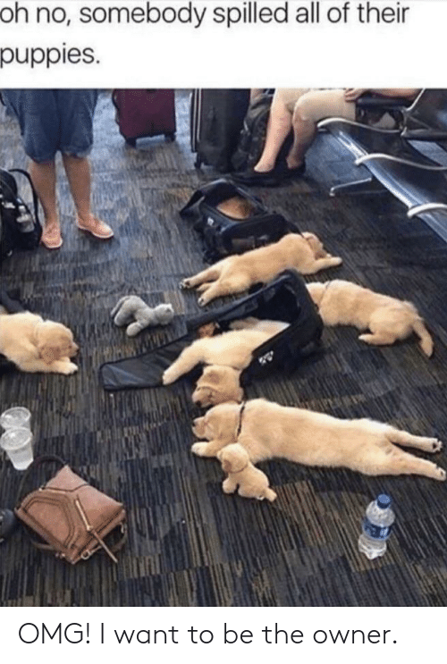 Puppies: oh no, somebody spilled all of their  puppies. OMG! I want to be the owner.