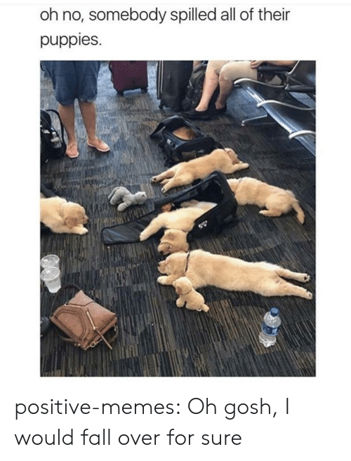 fall over: oh no, somebody spilled all of their  puppies. positive-memes:  Oh gosh, I would fall over for sure