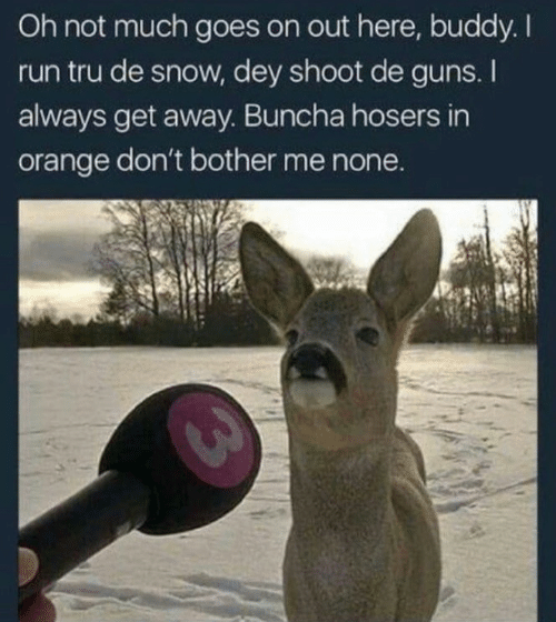 Goes On: Oh not much goes on out here, buddy. I  run tru de snow, dey shoot de guns. I  always get away. Buncha hosers in  orange don't bother me none.