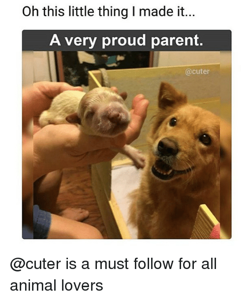 Memes, Animal, and Proud: Oh this little thing I made it...  A very proud parent.  @cuter @cuter is a must follow for all animal lovers