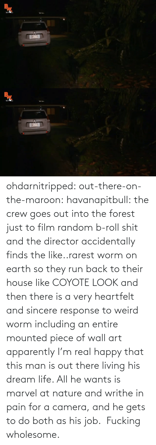 forest: ohdarnitripped:  out-there-on-the-maroon:  havanapitbull: the crew goes out into the forest just to film random b-roll shit and the director accidentally finds the like..rarest worm on earth so they run back to their house like COYOTE LOOK and then there is a very heartfelt and sincere response to weird worm including an entire mounted piece of wall art apparently I'm real happy that this man is out there living his dream life. All he wants is marvel at nature and writhe in pain for a camera, and he gets to do both as his job.    Fucking wholesome.