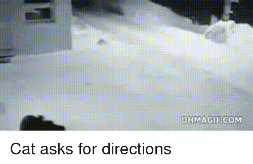 Ohmagifs: OHMAGIF.COM Cat asks for directions