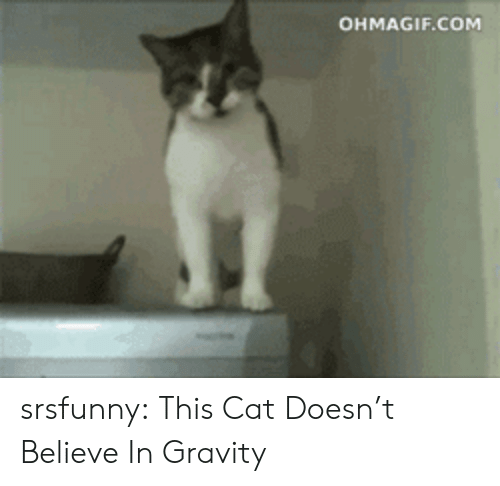 Ohmagif: OHMAGIF.COM srsfunny:  This Cat Doesn't Believe In Gravity