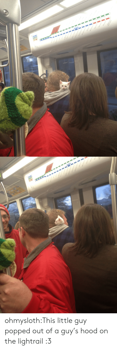 little guy: ohmysloth:This little guy popped out of a guy's hood on the lightrail :3