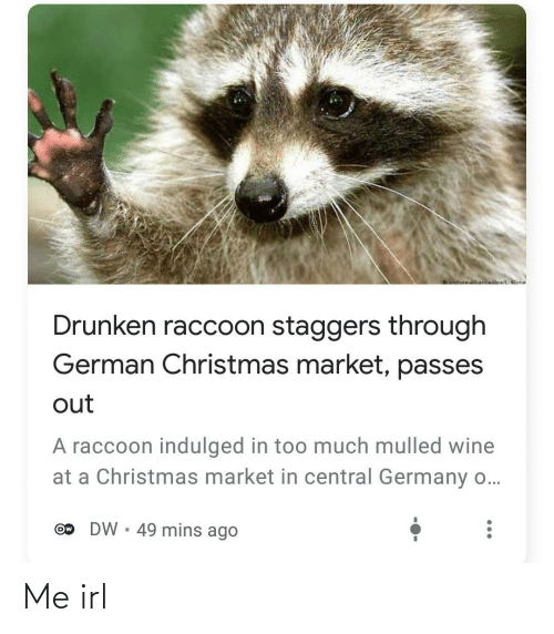 Wine: oictureNnwidoa/ Klime  Drunken raccoon staggers through  German Christmas market, passes  out  A raccoon indulged in too much mulled wine  at a Christmas market in central Germany o...  DW • 49 mins ago  Ow Me irl
