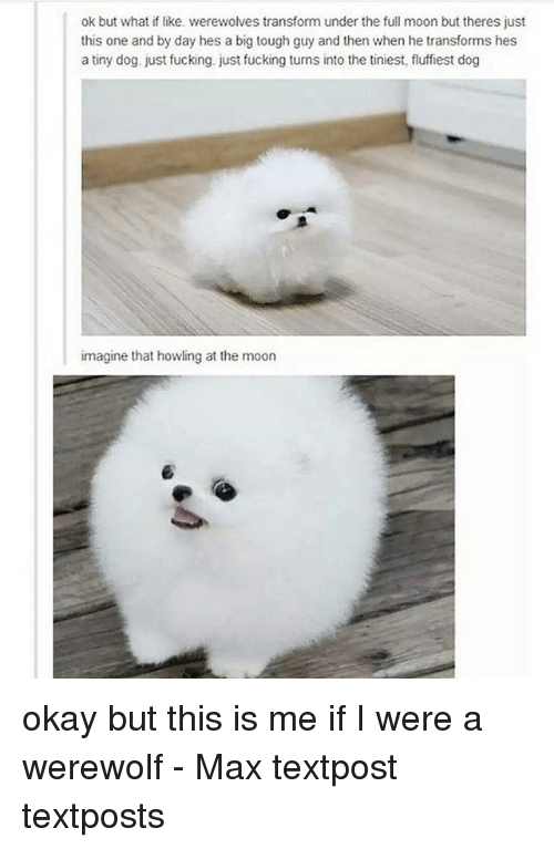 Fucking, Memes, and Moon: ok but what if like. werewolves transform under the full moon but theres just  this one and by day hes a big tough guy and then when he transforms hes  a tiny dog. just fucking. just fucking turns into the tiniest, fluffiest dog  imagine that howling at the moon okay but this is me if I were a werewolf - Max textpost textposts