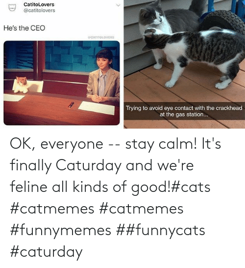 Cats: OK, everyone -- stay calm! It's finally Caturday and we're feline all kinds of good!#cats #catmemes #catmemes #funnymemes ##funnycats #caturday