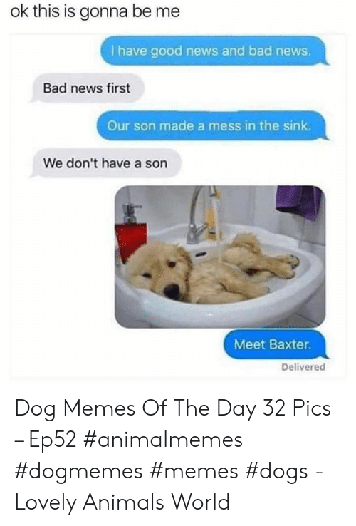 Animals, Bad, and Dogs: ok this is gonna be me  I have good news and bad news.  Bad news first  Our son made a mess in the sink.  We don't have a son  Meet Baxter.  Delivered Dog Memes Of The Day 32 Pics – Ep52 #animalmemes #dogmemes #memes #dogs - Lovely Animals World
