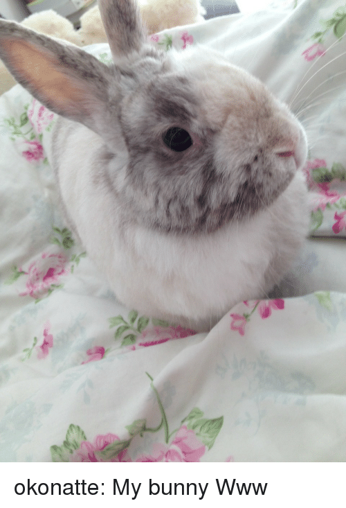 Target, Tumblr, and Blog: okonatte:  My bunny Www