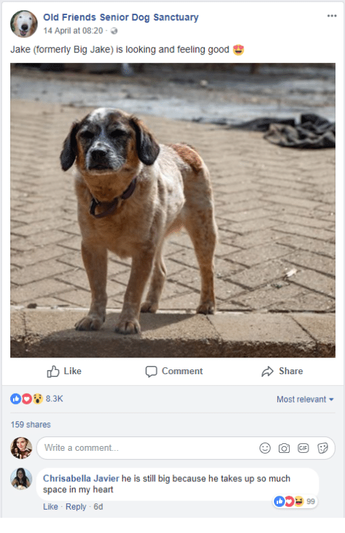 javier: Old Friends Senior Dog Sanctuary  14 April at 08:20 .  Jake (formerly Big Jake) is looking and feeling good  Like  Comment  Share  Most relevant  159 shares  Write a comment..  Chrisabella Javier he is still big because he takes up so much  space in my heart  Like Reply -6d  0599
