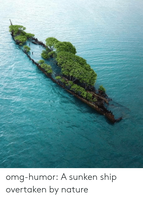 Omg, Tumblr, and Blog: omg-humor:  A sunken ship overtaken by nature