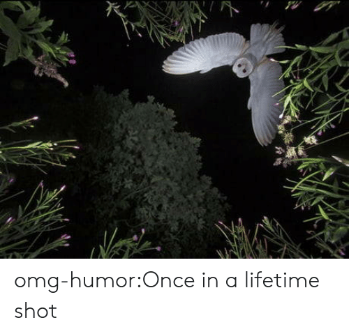 Once In A Lifetime: omg-humor:Once in a lifetime shot