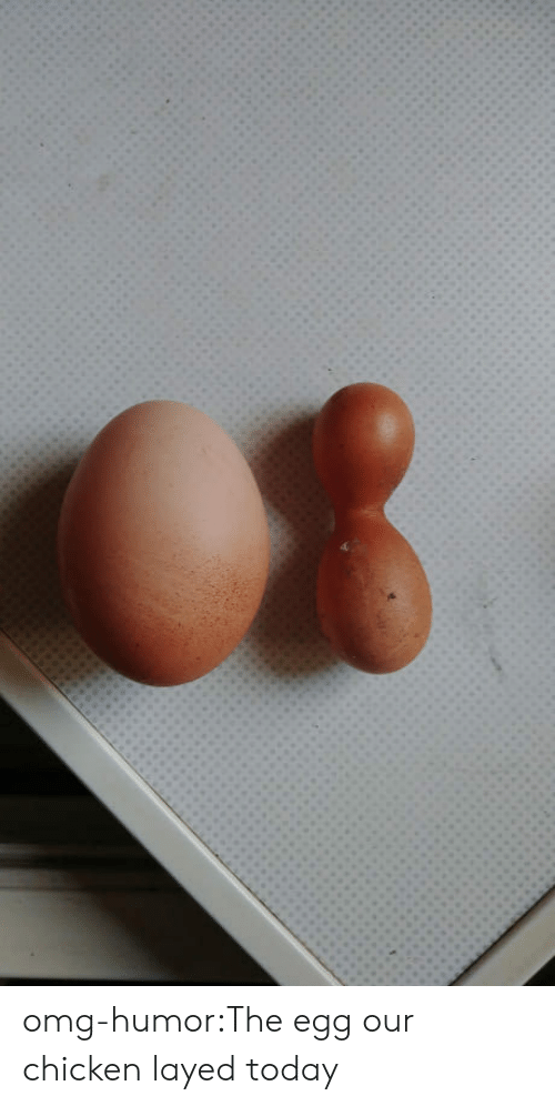 layed: omg-humor:The egg our chicken layed today