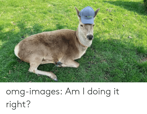 Am I Doing It Right: omg-images:  Am I doing it right?